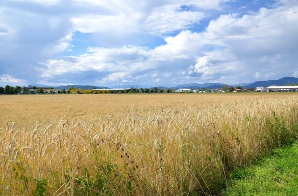 Crop field outside of Klagenfurt,