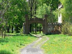 Falenty Alder grove by Kubek